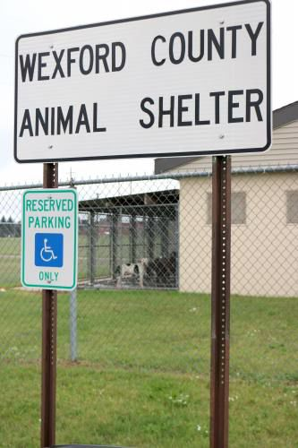 Wexford Co. Animal Shelter closed due to parvovirus