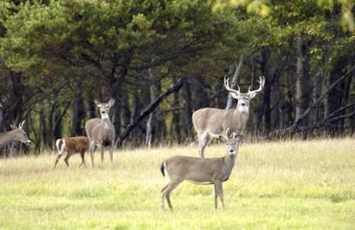 DNR reminds Michiganders of baiting ban, to keep deer away from bird feeders