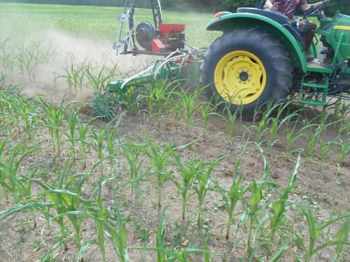 Cover crops: Our football helmet for the game against nature