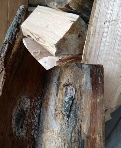 Moving firewood can damage trees and forests