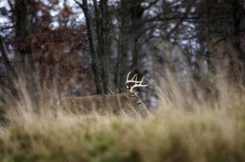 Hunting, deer season an economic boon for state, region