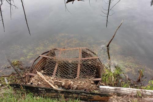 DNR crew begins removing Missaukee County dam