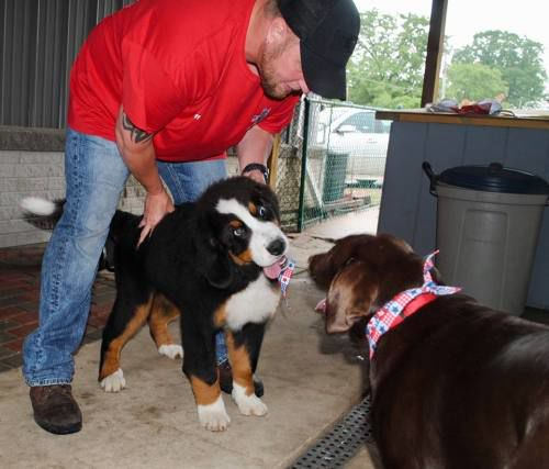 Dog Owners Get Ready For Lake City Diamond In The Ruff
