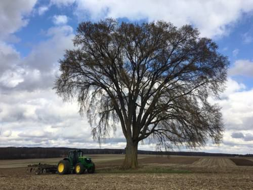 Contest: Northern Michigan contains some of the biggest trees in state