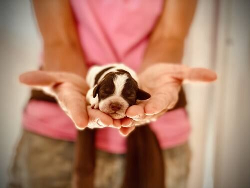 Breeders say they're getting tons of calls about puppies