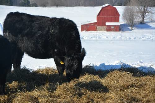How farmers handle cold Michigan winter, 'part of living here'