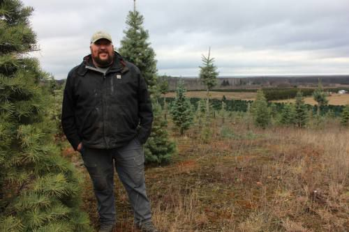Christmas tree industry's slow season? Starts now.