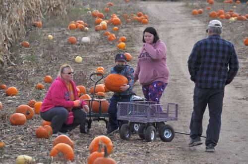 Families take a break from the daily grind to visit area pumpkin patches