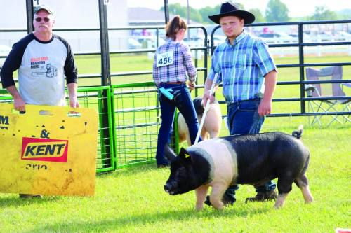 Northern District Fair starts with 4-H judging