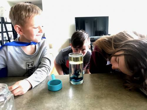 Marion SEEDS program offering activity boxes during pandemic