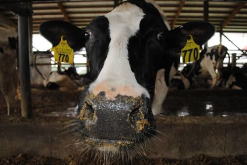 'Dairy farms are closing their doors every day'