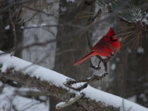 Tranquil scenes of winter in Northern Michigan | Multimedia