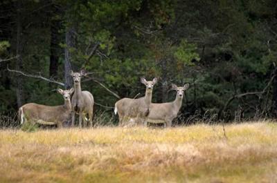 Osceola 'deer farm' operator fined for several facility violations