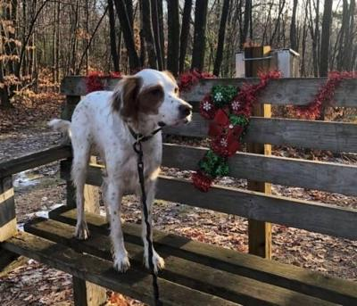 Dog walking can help make your neighborhood safer