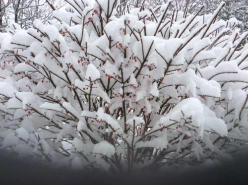 Winter's colors