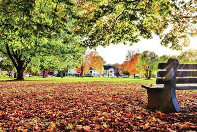 Fallen Leaves At Bandstand Park