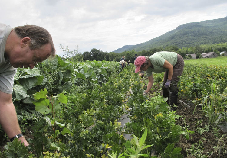Crop Mob Descends On Vermont Farm To Harvest And Weed Crops
