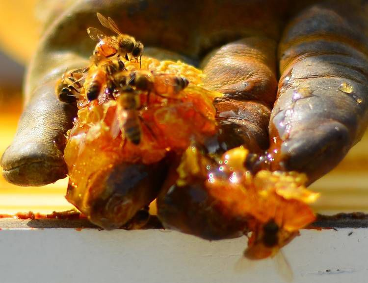 Beekeeping In The North Country: Fueling The Farm-To-Table