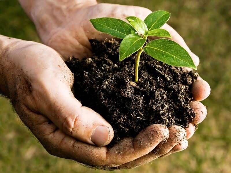 Compost Collection A Fertile Business