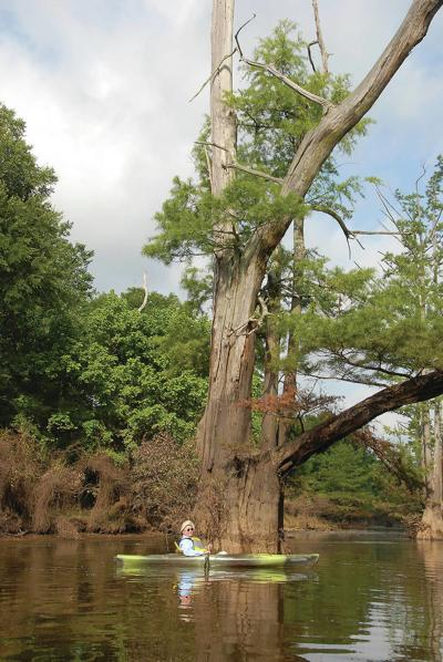 Thoughts on the Out-of-Doors: Floating Arkansas' Little Maumelle River