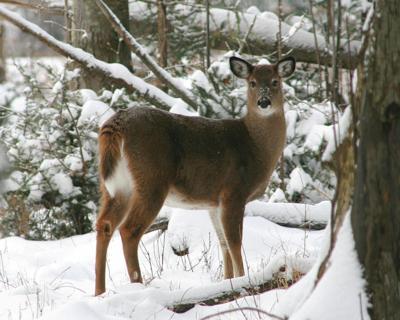 Muzzleloader Antlerless Deer Permit Winners Announced