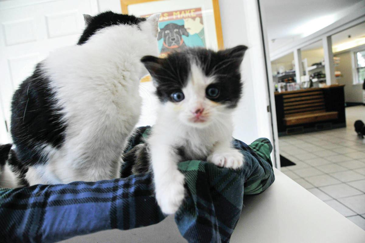 SAD-SAC Meets Needs For Sick Mom, Kittens