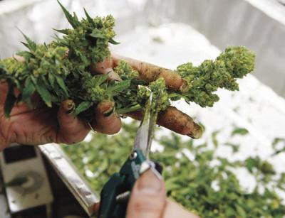 St. J Select Board Re-Opening Discussion About Marijuana Retail Sales