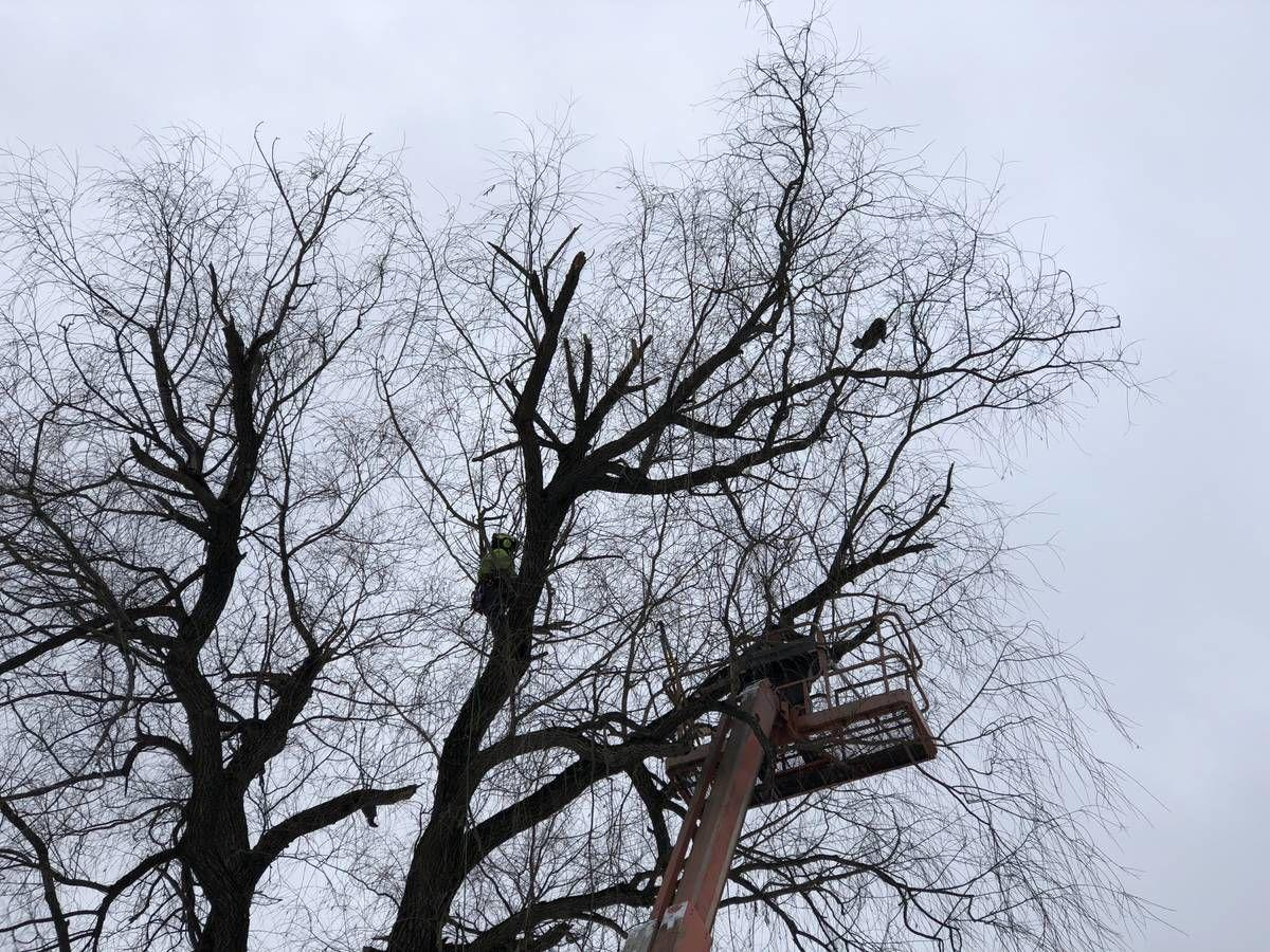 Dramatic Cat Rescue From Caledonia Street Tree