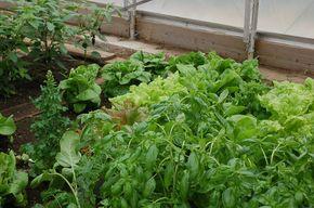 LyndonvilleStudents, Summer Garden Flourish