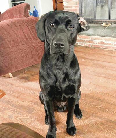 Northeast KingdomScammers Target Shot Dog Fundraiser
