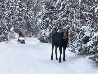 Sno-moose-chine