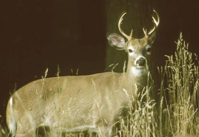 Deer Ages Available on VTF&W Website