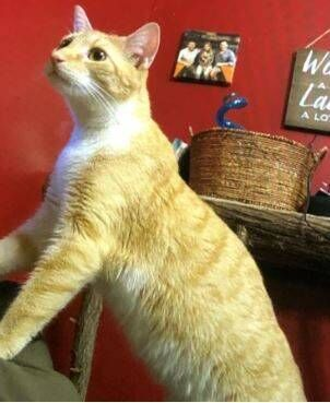 VSP: Juvenile Accused Of Stealing 4 Cats