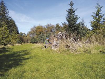 Volunteer event scheduled to produce 'habitat piles'
