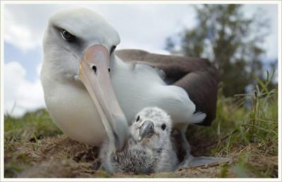 The film Albatross will be screened at NCRD in Nehalem on June 8_submitted photo.jpg
