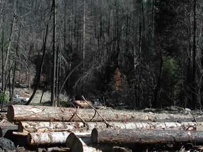 Salvaged_logs_from_burnt_forest_(4).JPG