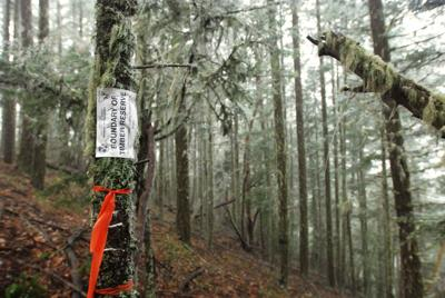 County mistakenly exits forest committee