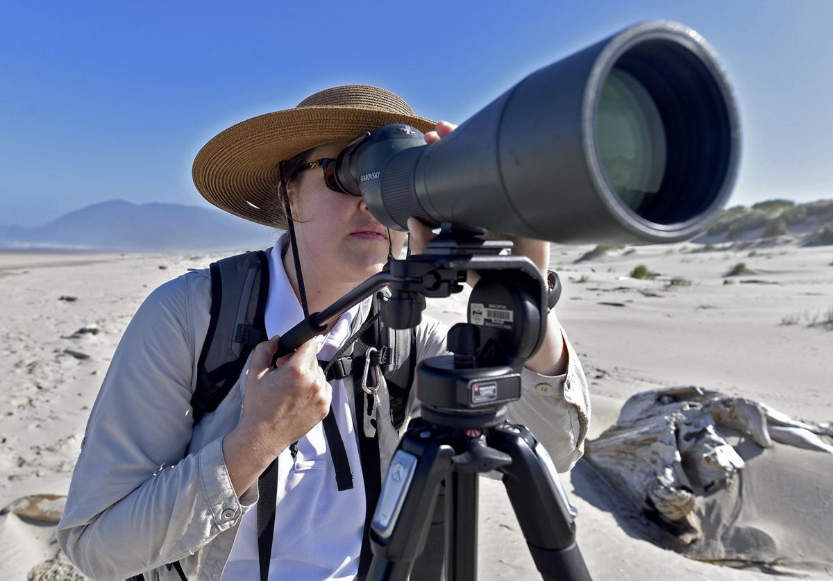 Gearhart return of western snowy plover proves elusive