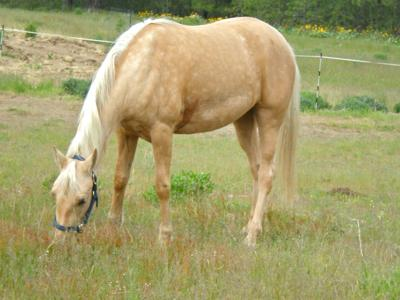 College to offer horse care classes