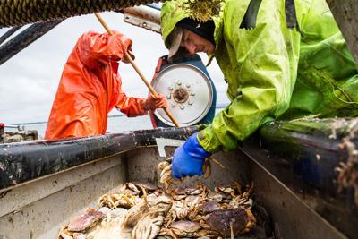 Recreational crabbing reopened along most of Oregon Coast