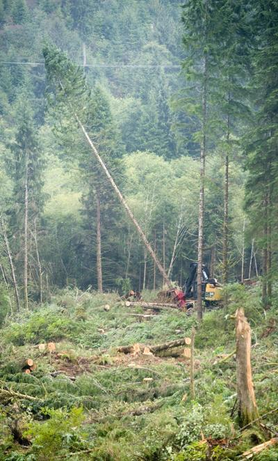 Forestry issues a dividing line for state House