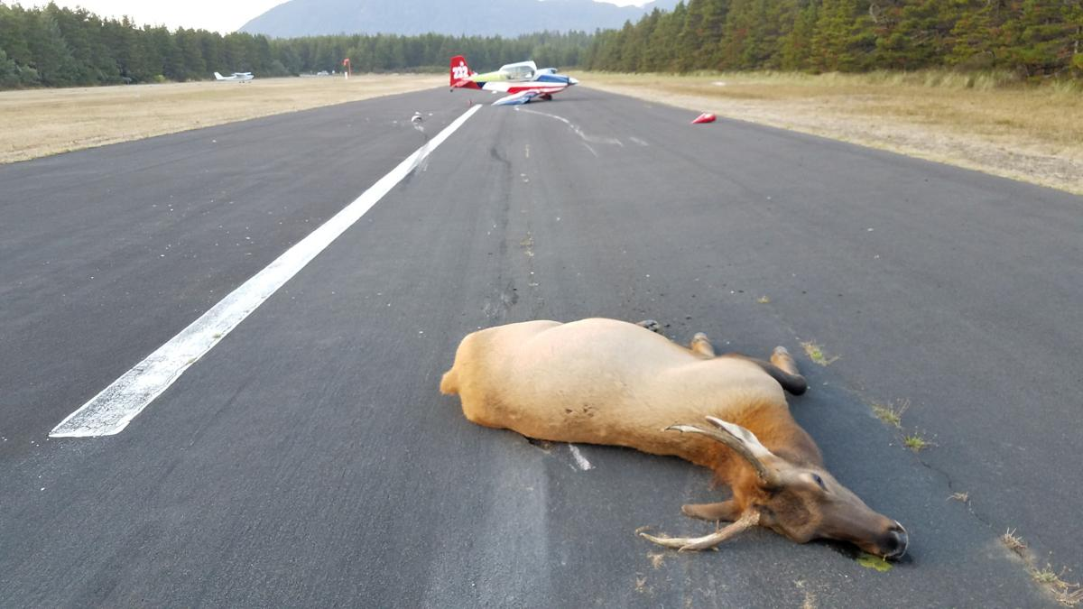 Pilot hits elk during landing