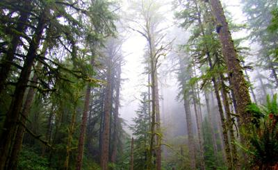 State lands considers forest management options