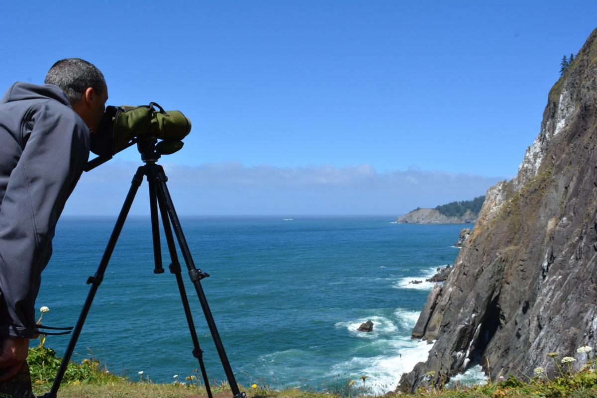 Bird Monitoring Training held at Cannon Beach City Hall June 8_submitted photo.JPG