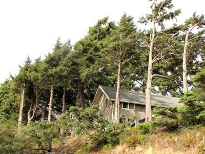 Should you limb up evergreen trees?
