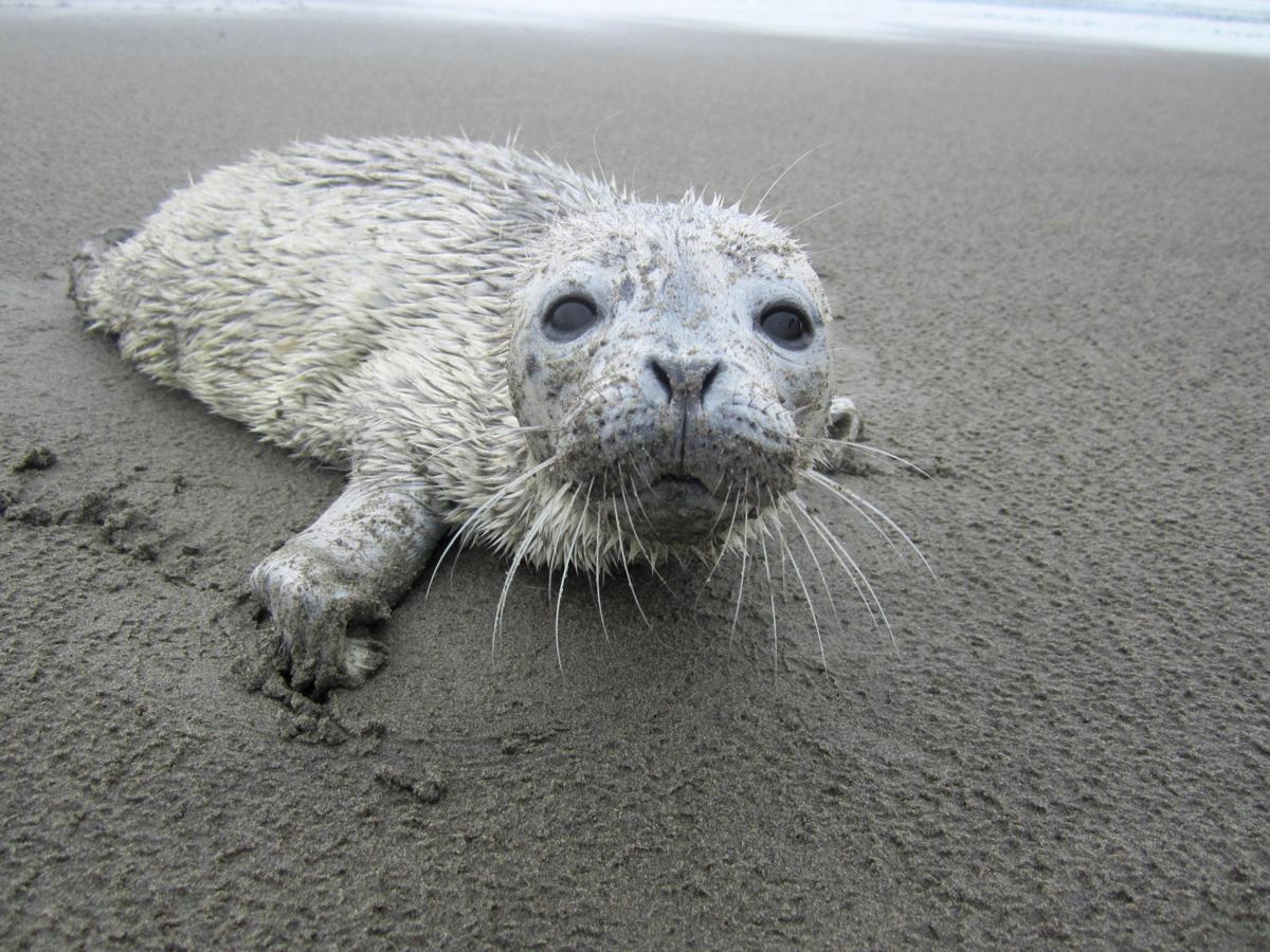 Don't touch seal pups on the beach