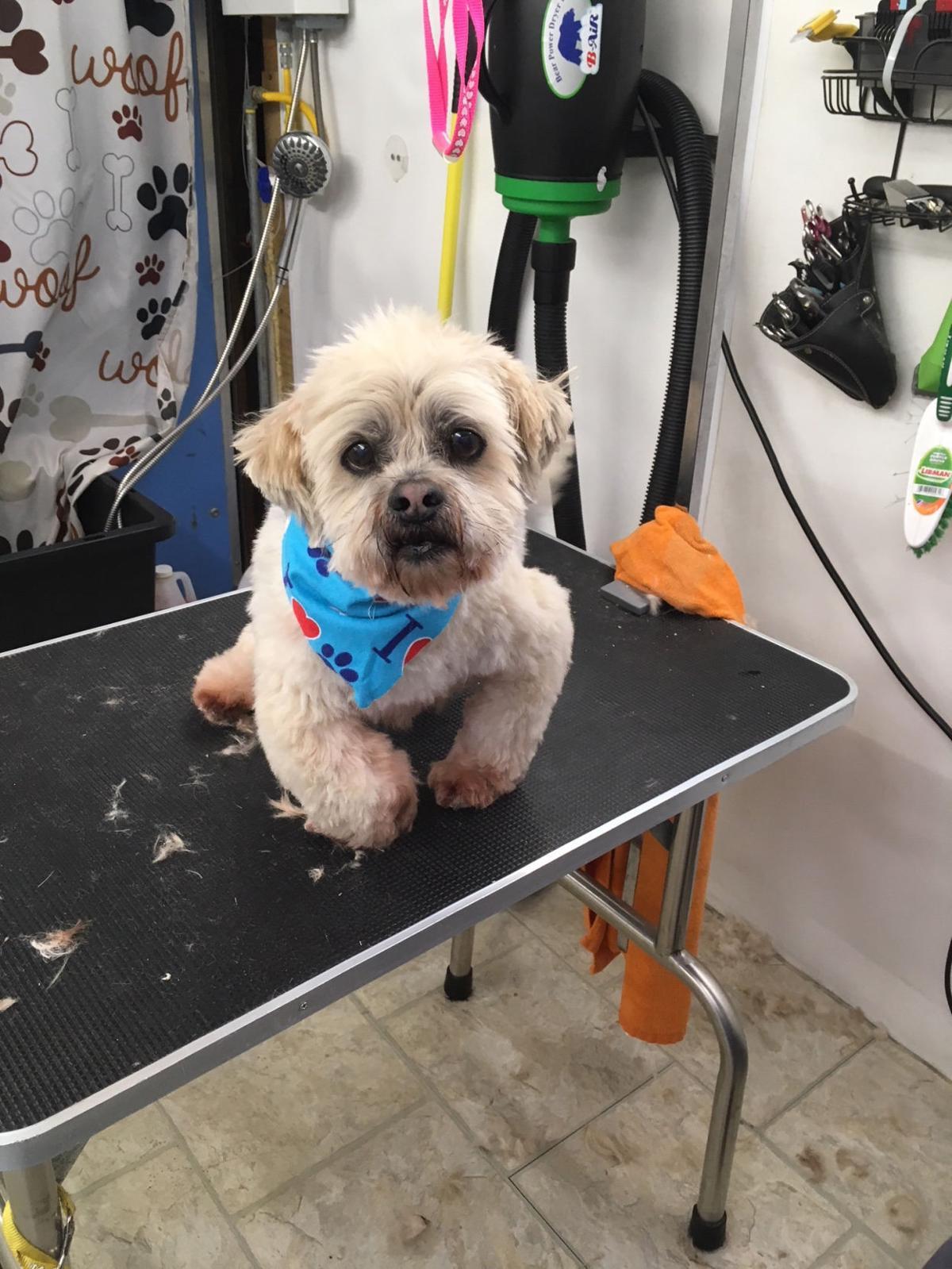 Basil gets a haircut