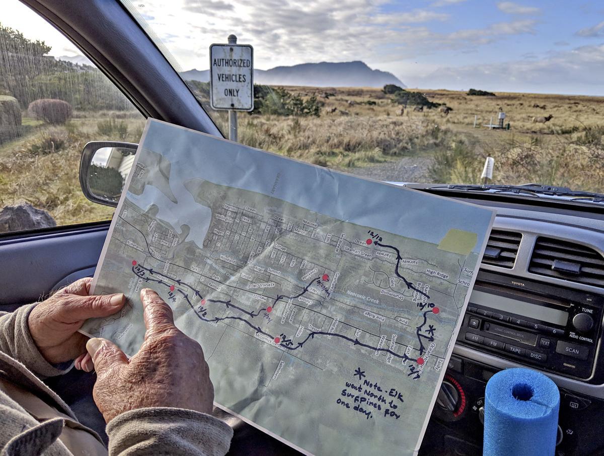 Tracking elk