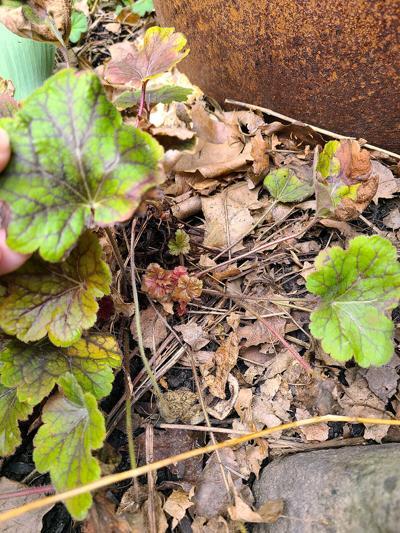 050621.N.CF.Perennials.jpeg