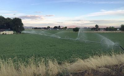 Sprinklers give more control over irrigation